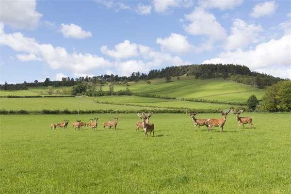Deer Farm, Pasture