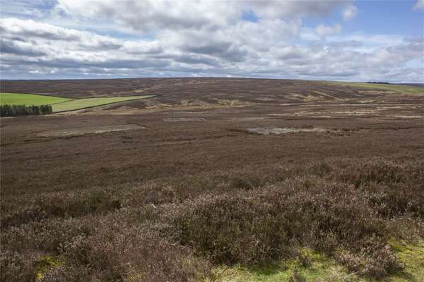 Grouse Moor